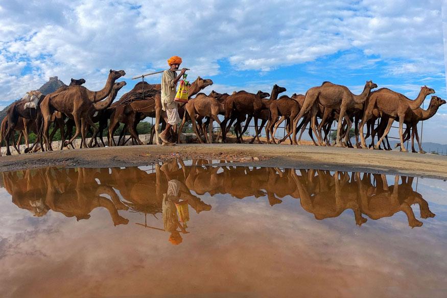 Pushkar-Camel-Fair-beautiful-pic