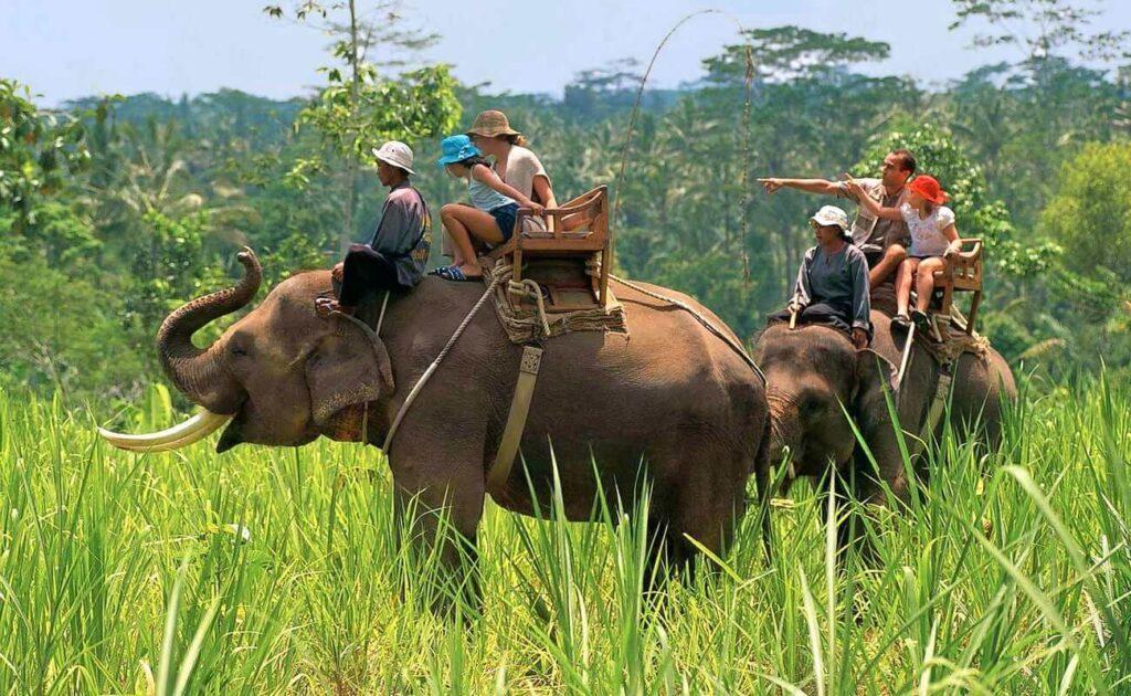 elephant-safari-in-jim-corbett