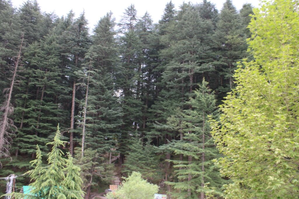 Manali Forest